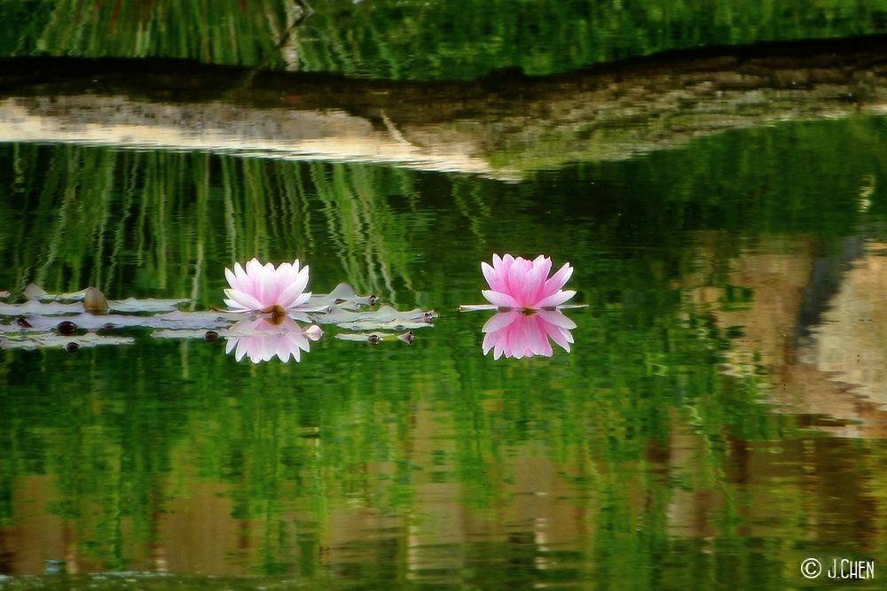 """""""Le Silence des rivières"""""""