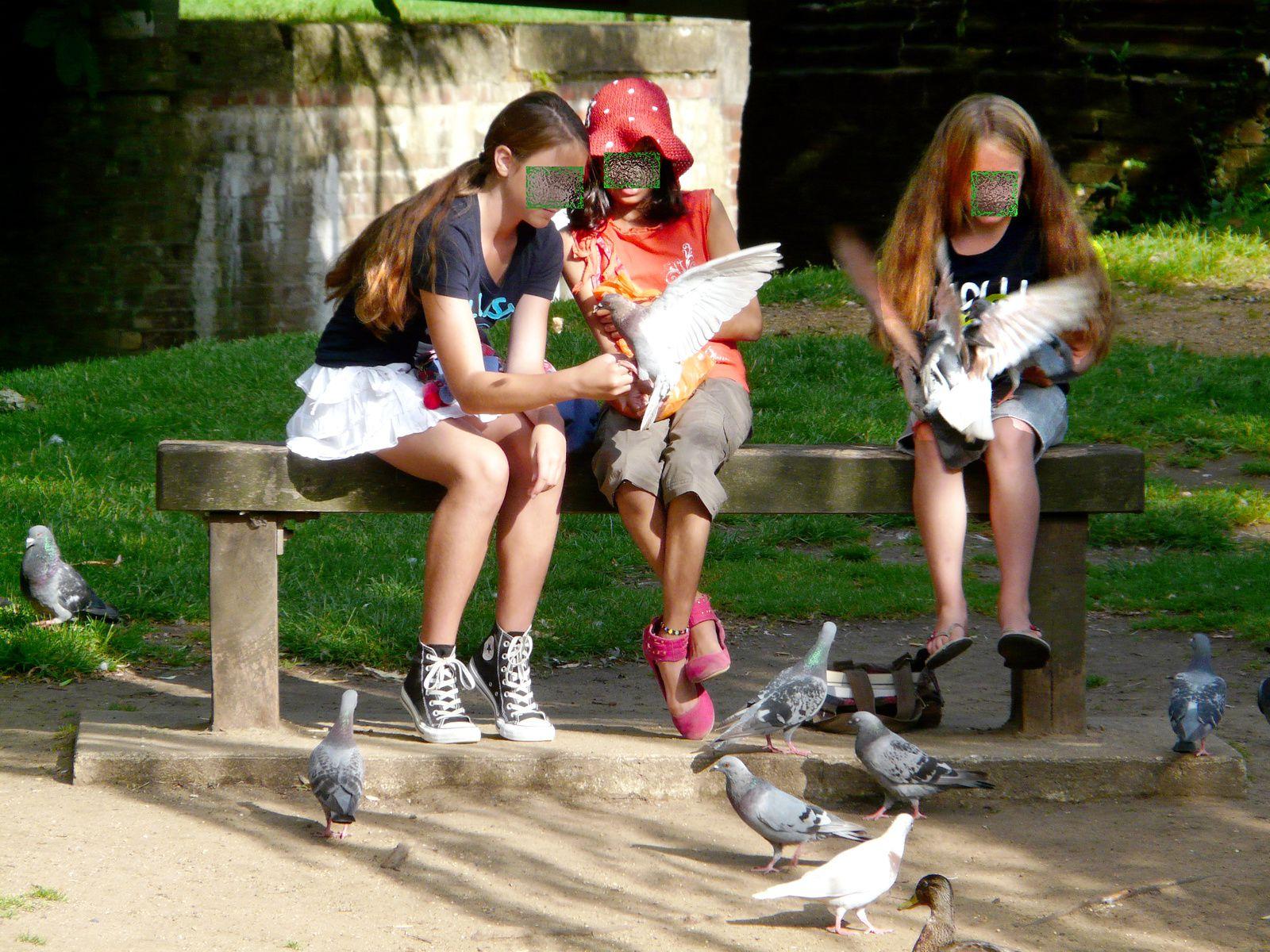 oiseaux mes frères...