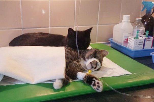 L'histoire de chat la plus incroyable !