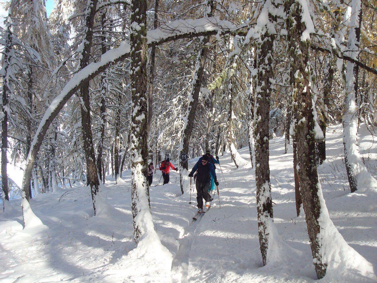 Un petit détour par la forêt et ses arches pour oublier les pilônes.