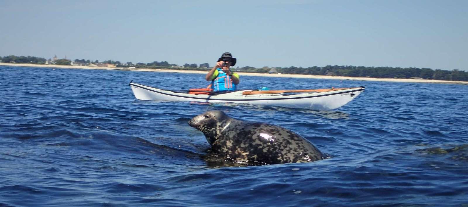 Retour aux Etocs, paradis des phoques