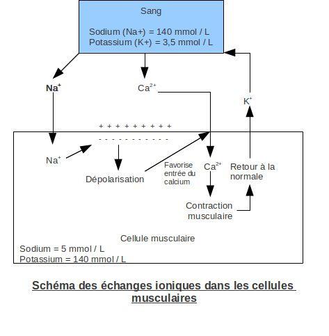 L'hyperkaliémie. Copyright Techniques d'élevage. Nantes