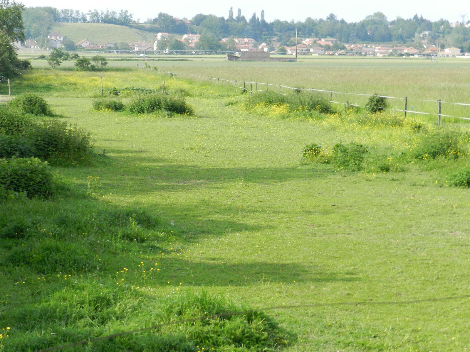 Pré avec zones de refus et une zone surpâturée au centre. Techniques d'élevage 2014. Image soumise à droits d'auteur