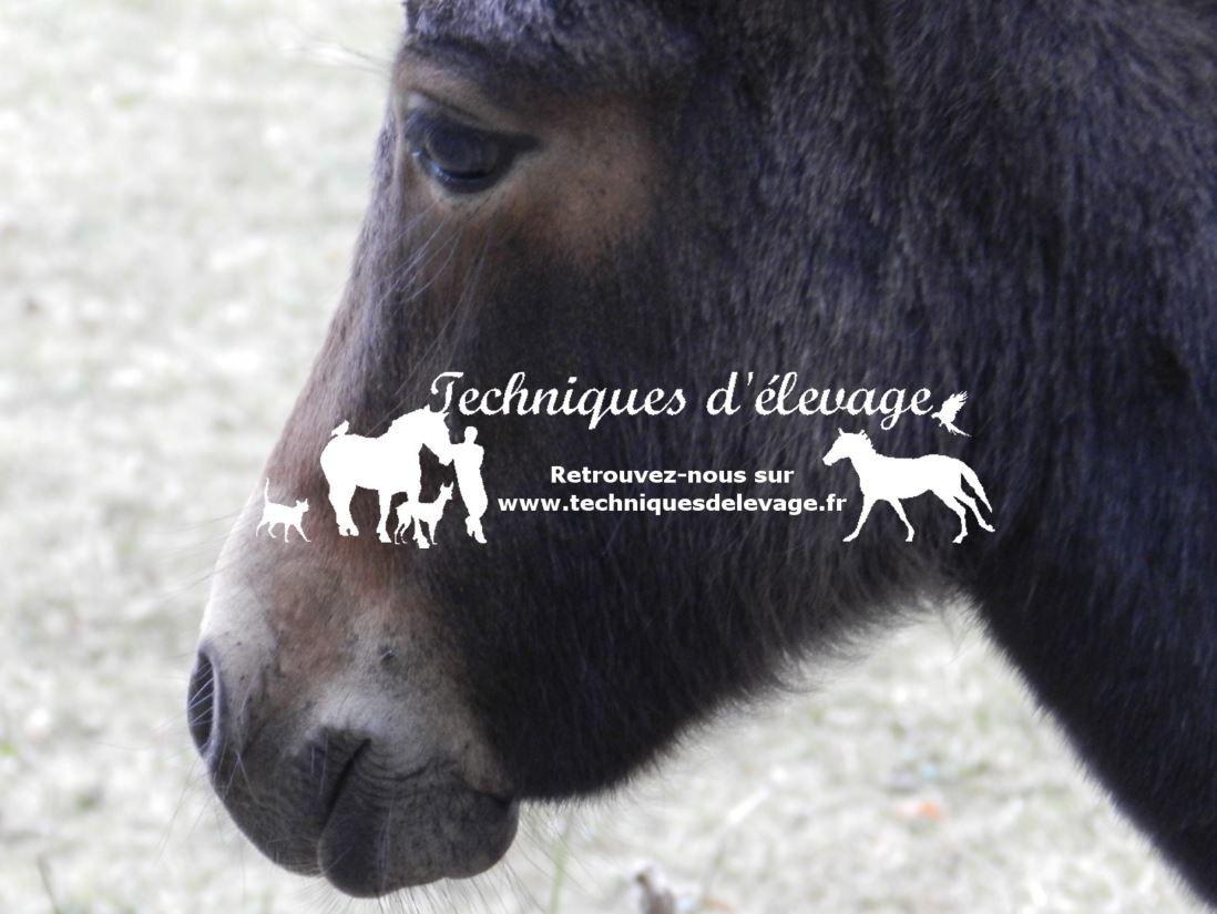Jeune mule - Tous droits réservés à Techniques d'élevage