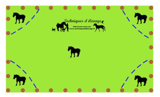 Isoler des chevaux au pré. Techniques d'élevage. Tous droits réservés