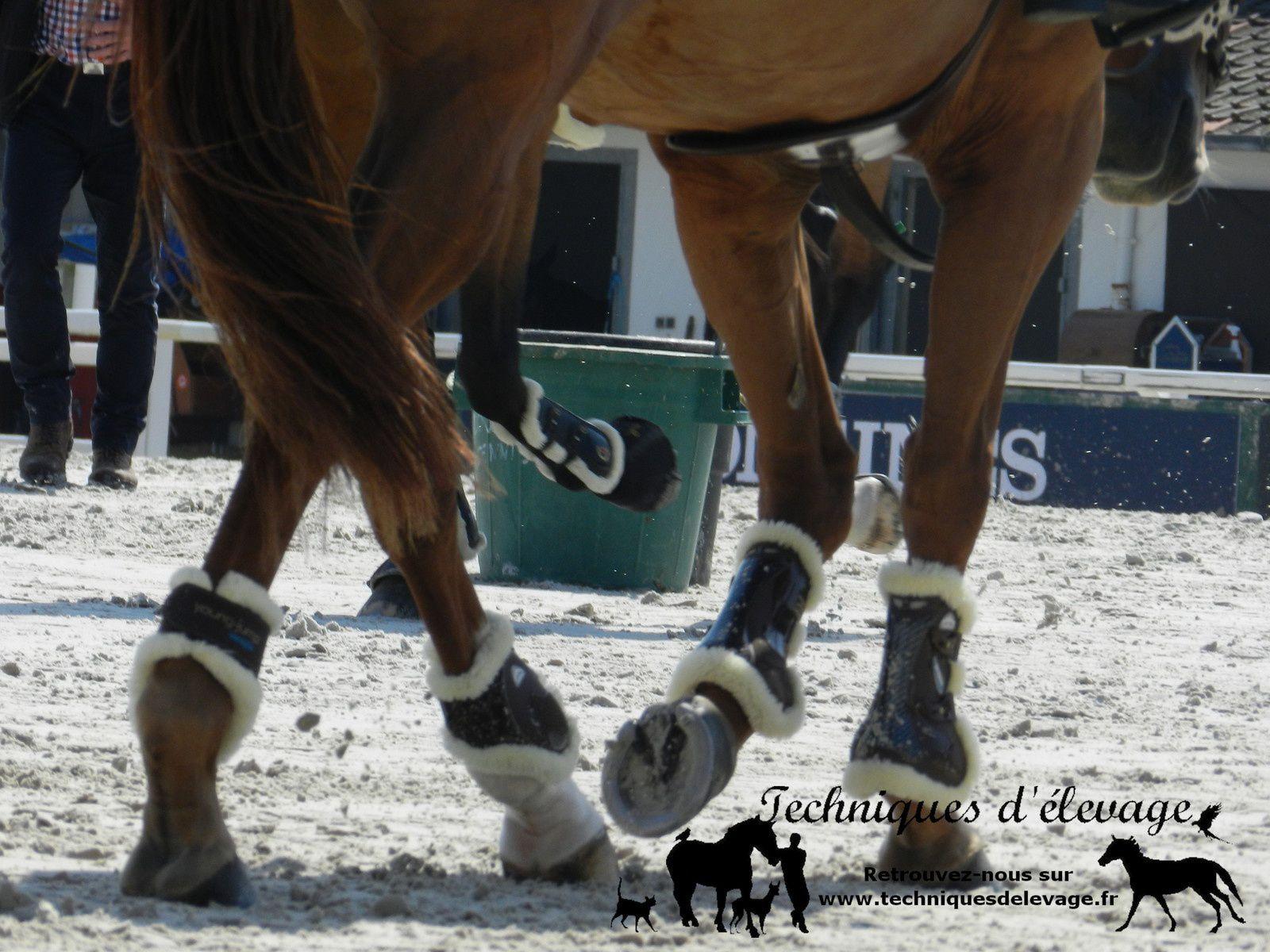 Membres d'un cheval. Techniques d'élevage. Tous droits réservés