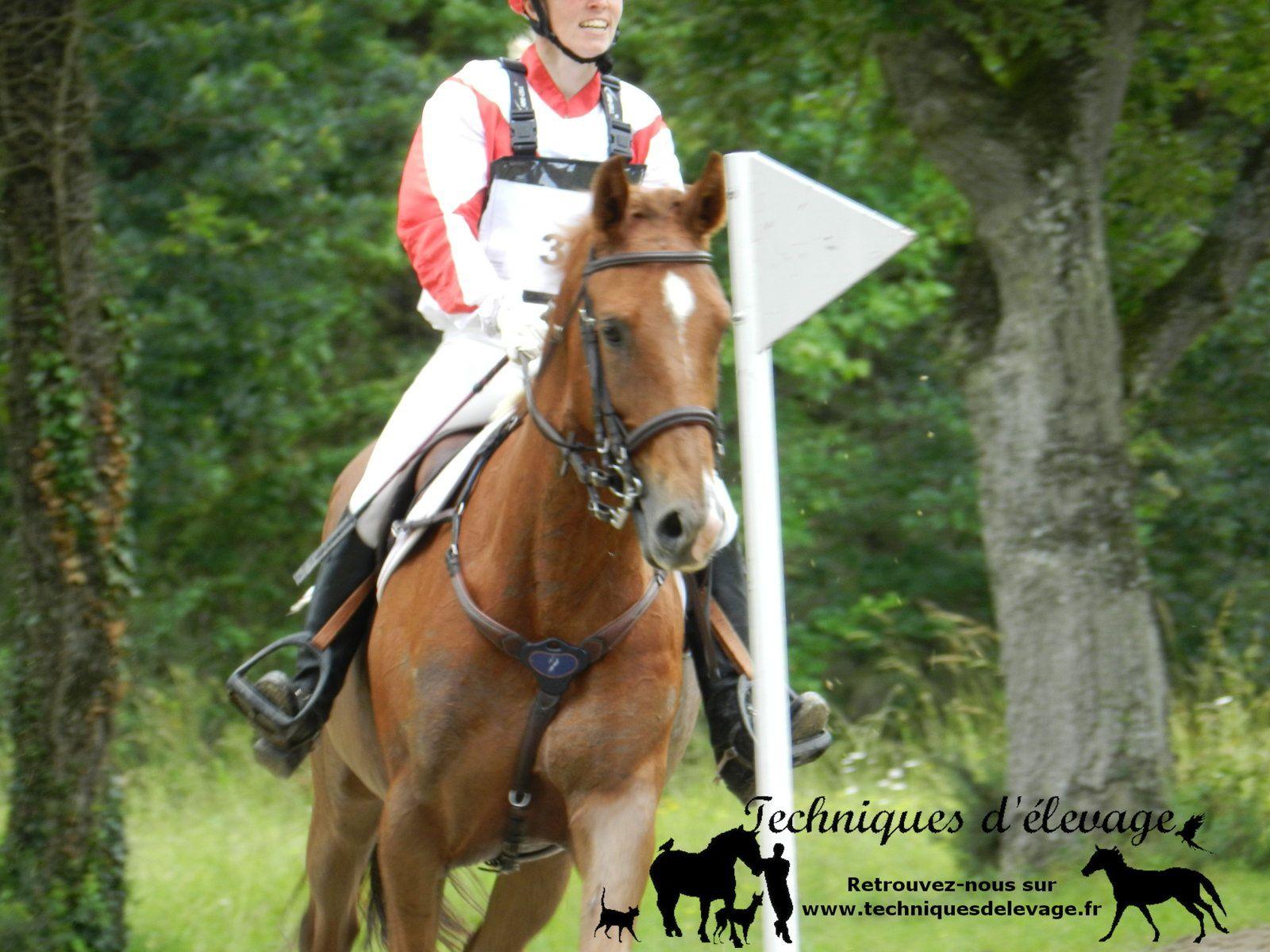 Jeune cheval sur le cross. Technique d'élevage. Tous droits réservés