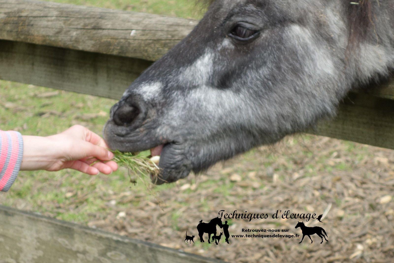 L'enfant et le poney. Techniques d'élevage. Tous droits réservés
