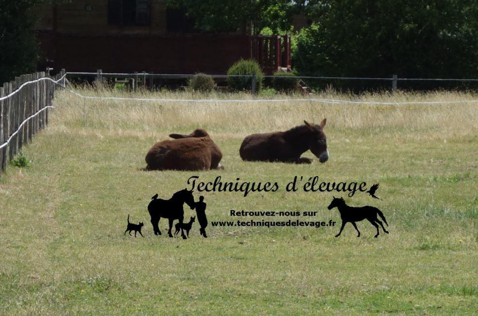 Deux ânes dans un pré. Tous droits réservés à Techniques d'élevage