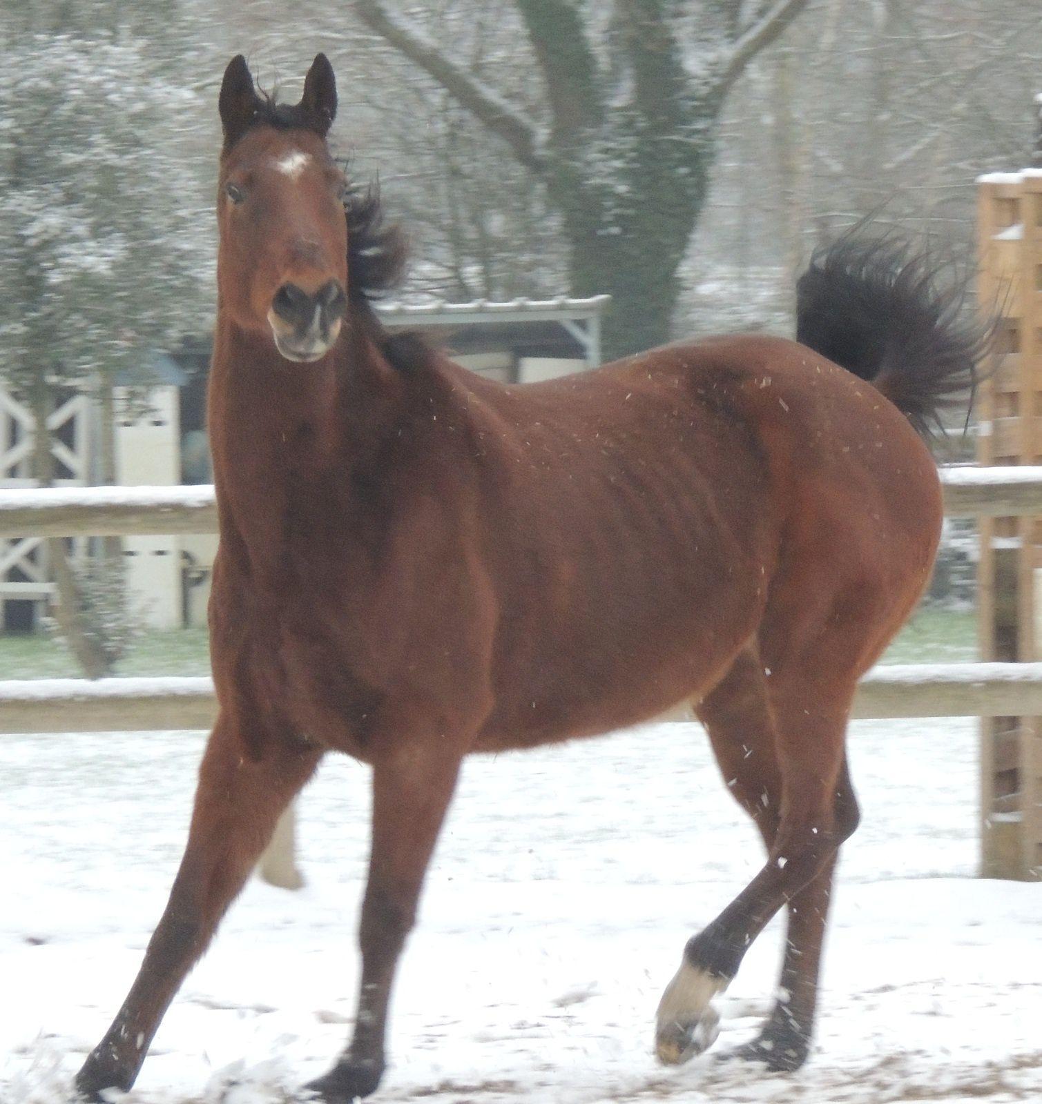 Cheval dans la neige. Catherine Kaeffer. Techniques d'élevage, Nantes. Image soumise à droits d'auteur
