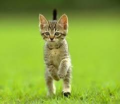 Amateurs de chats, ne pas s'abstenir