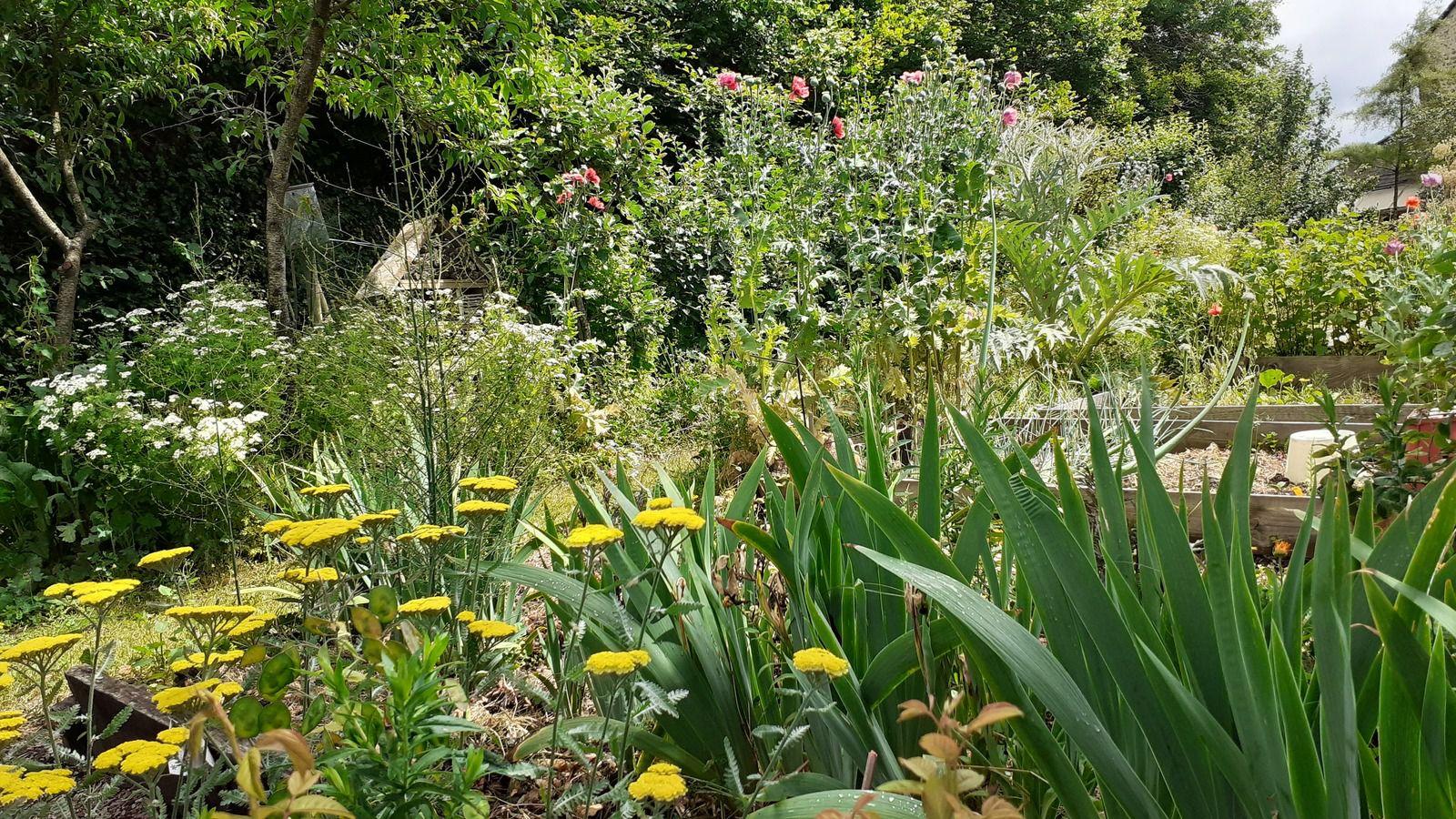 Quelques jolis clichés  mai  juin c'est une  belle saison au jardin .
