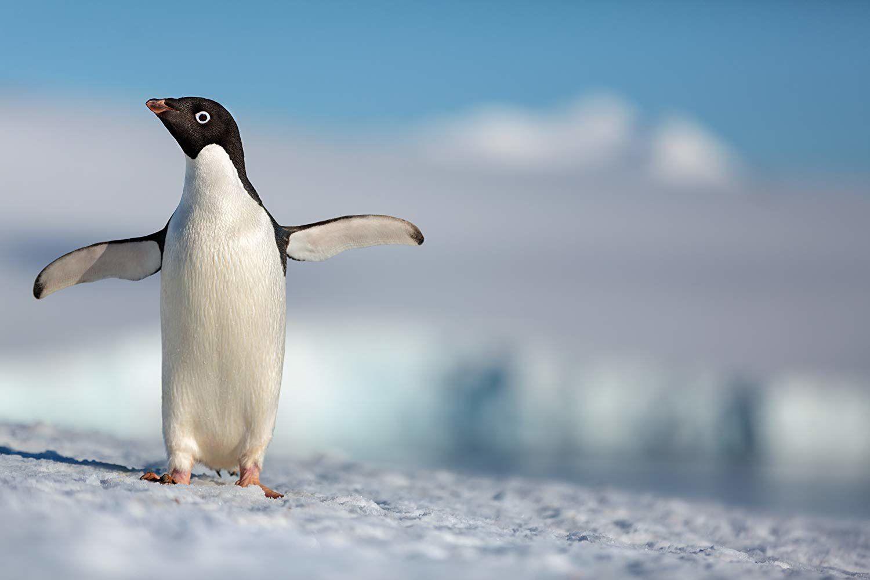 Disneynature Penguins (BANDE-ANNONCE) Documentaire de Jeff Wilson et Alastair Fothergill