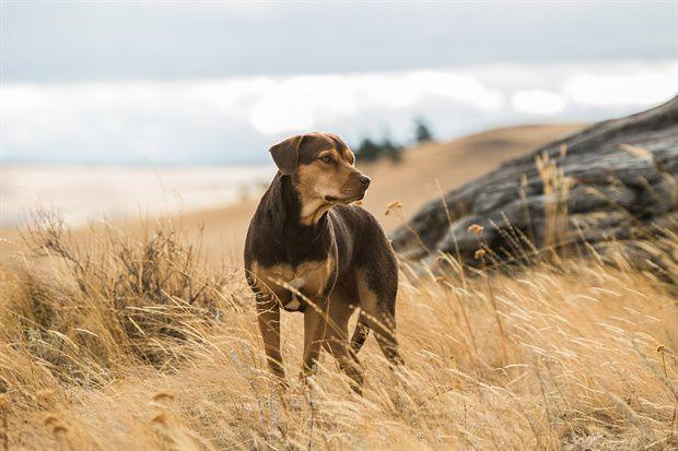 L'Incroyable aventure de Bella (BANDE-ANNONCE) avec Bryce Dallas Howard, Ashley Judd - Le 10 avril 2019 au cinéma (A Dog's Way Home)