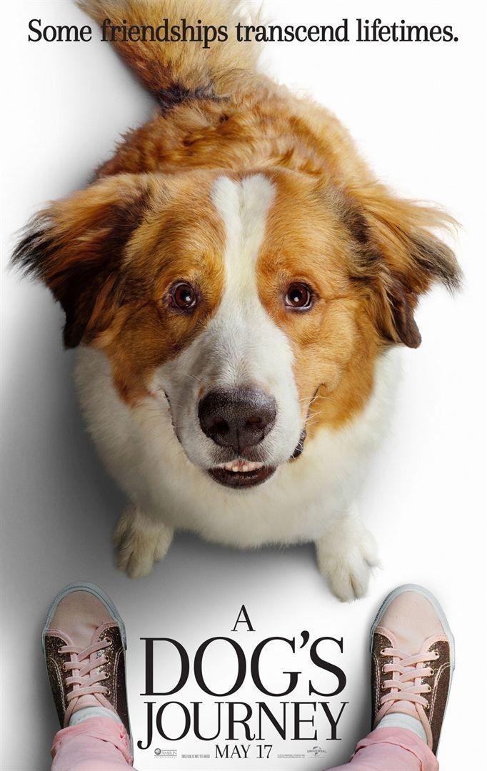 Mes autres vies de chien (BANDE-ANNONCE) avec Dennis Quaid, Betty Gilpin, Josh Gad - Le 21 août 2019 au cinéma