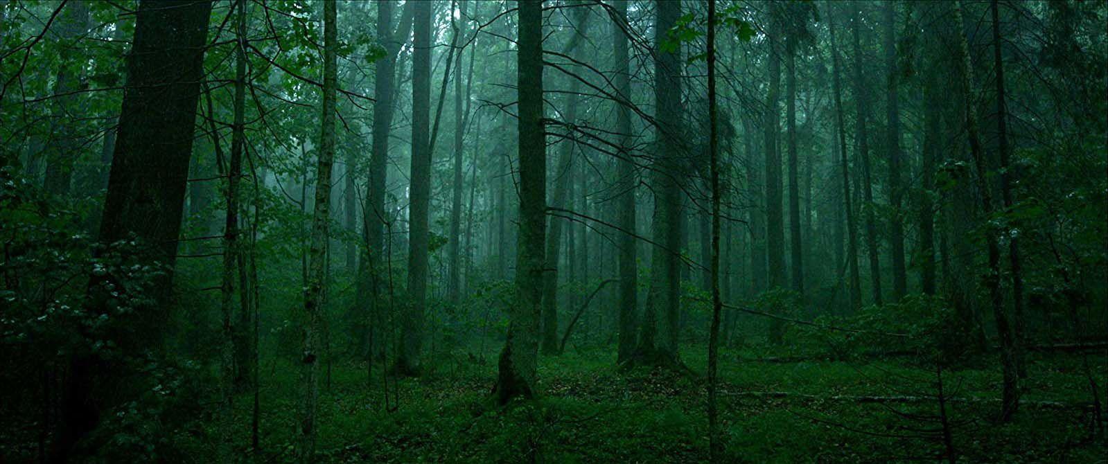 Dans les bois (BANDE-ANNONCE) Documentaire de Mindaugas Survila - Le 6 mars 2019 au cinéma