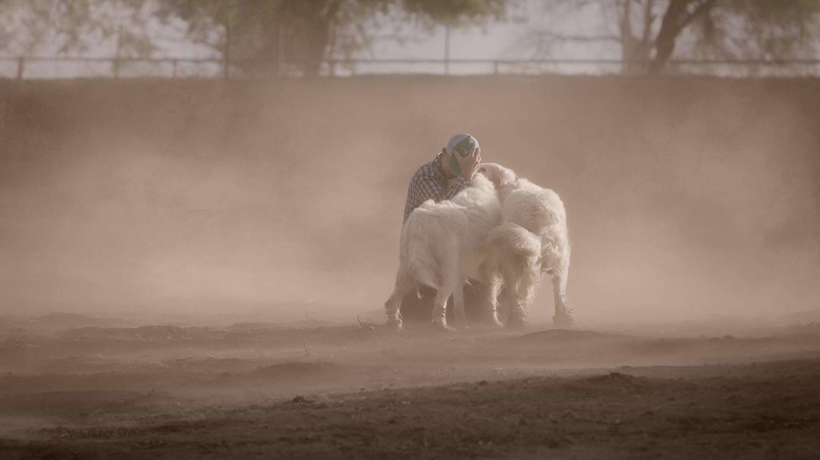 Tout est possible (The biggest little farm) Documentaire de John Chester - Le 9 octobre 2019 au cinéma