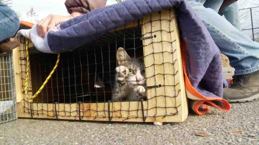 The Cat Rescuers (BANDE-ANNONCE) Documentaire de Rob Fruchtman et Steve Lawrence