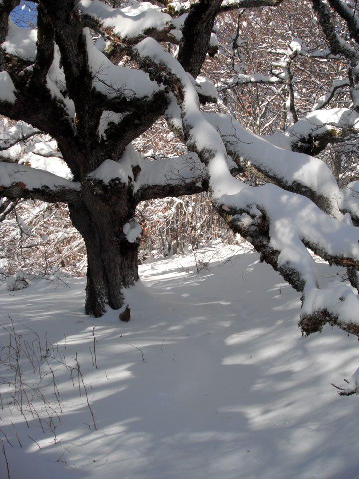 Salève d'hiver…