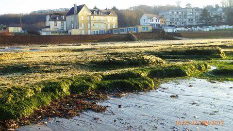 Algues vertes d'hiver plage du Ris