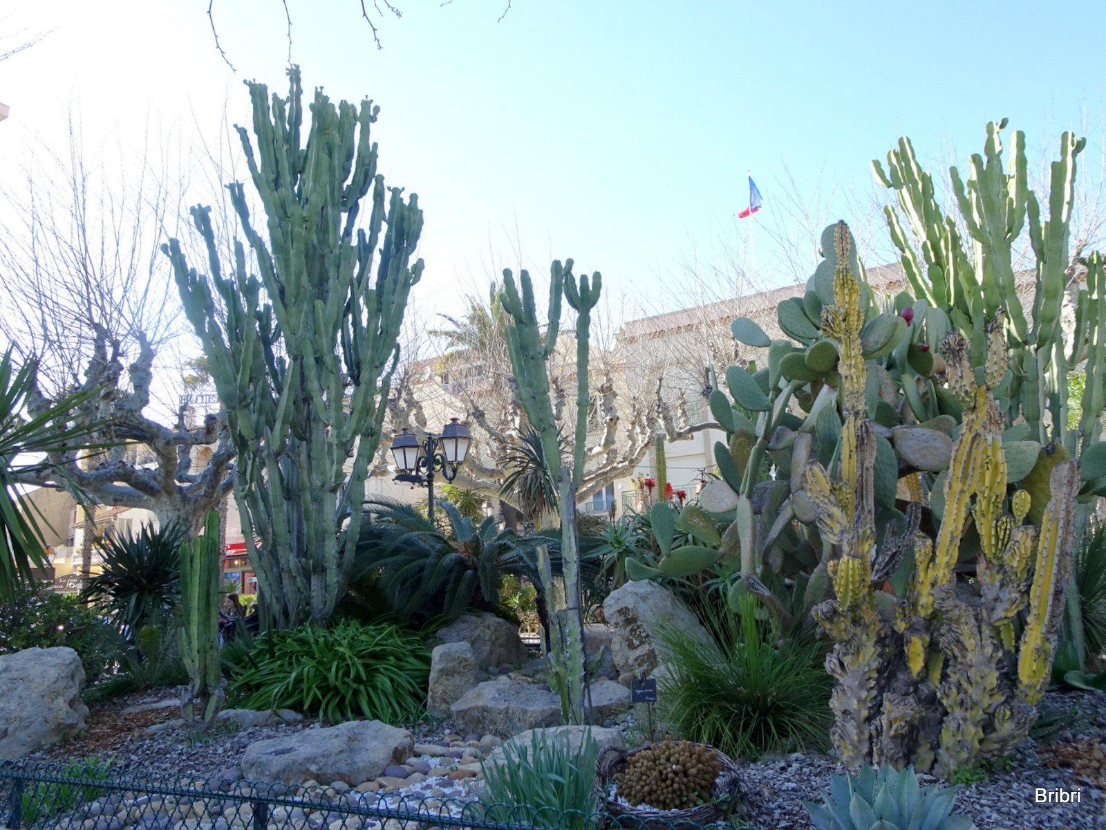 Avec ce grand soleil  nous allons flâner au Lavandou voir la ville avec ses plantes cactées et son port.