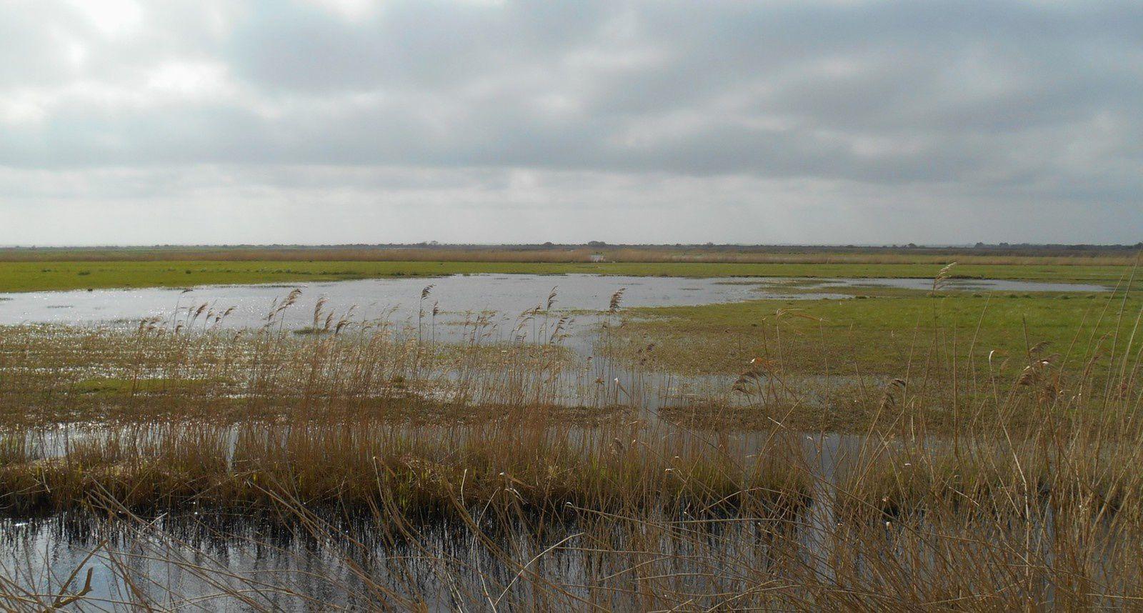 En direction du Grand Veys, les marais.