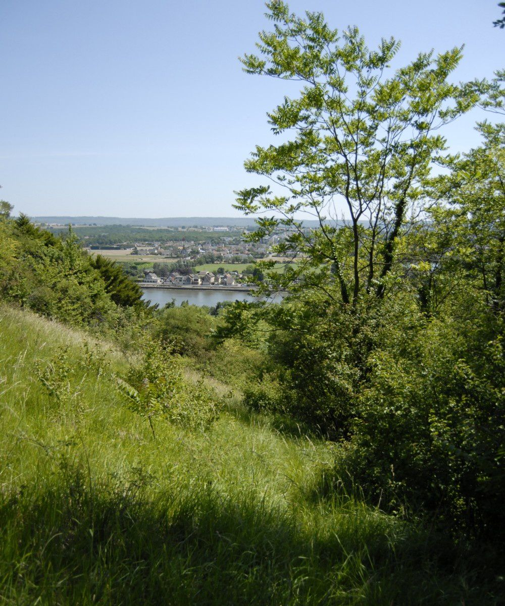 pelouses calcicoles
