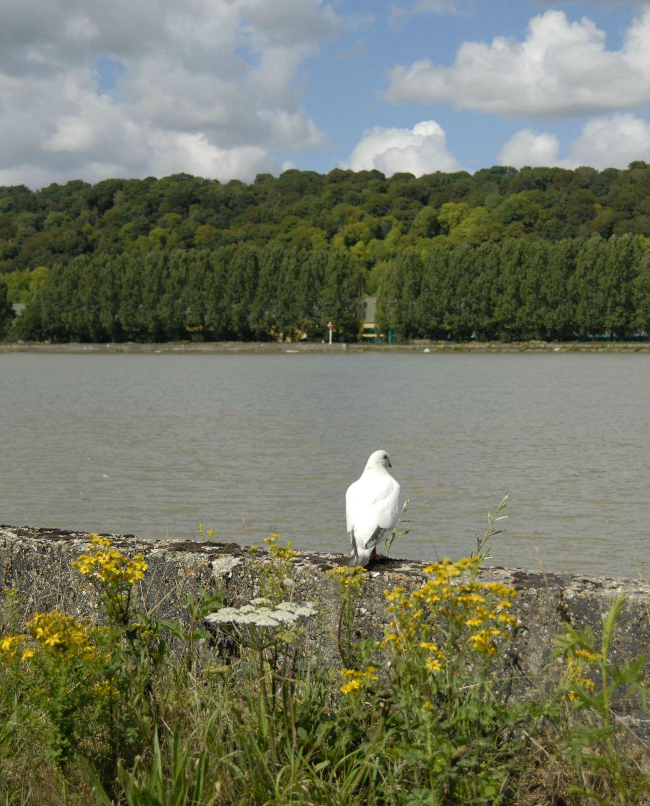 berge de Seine