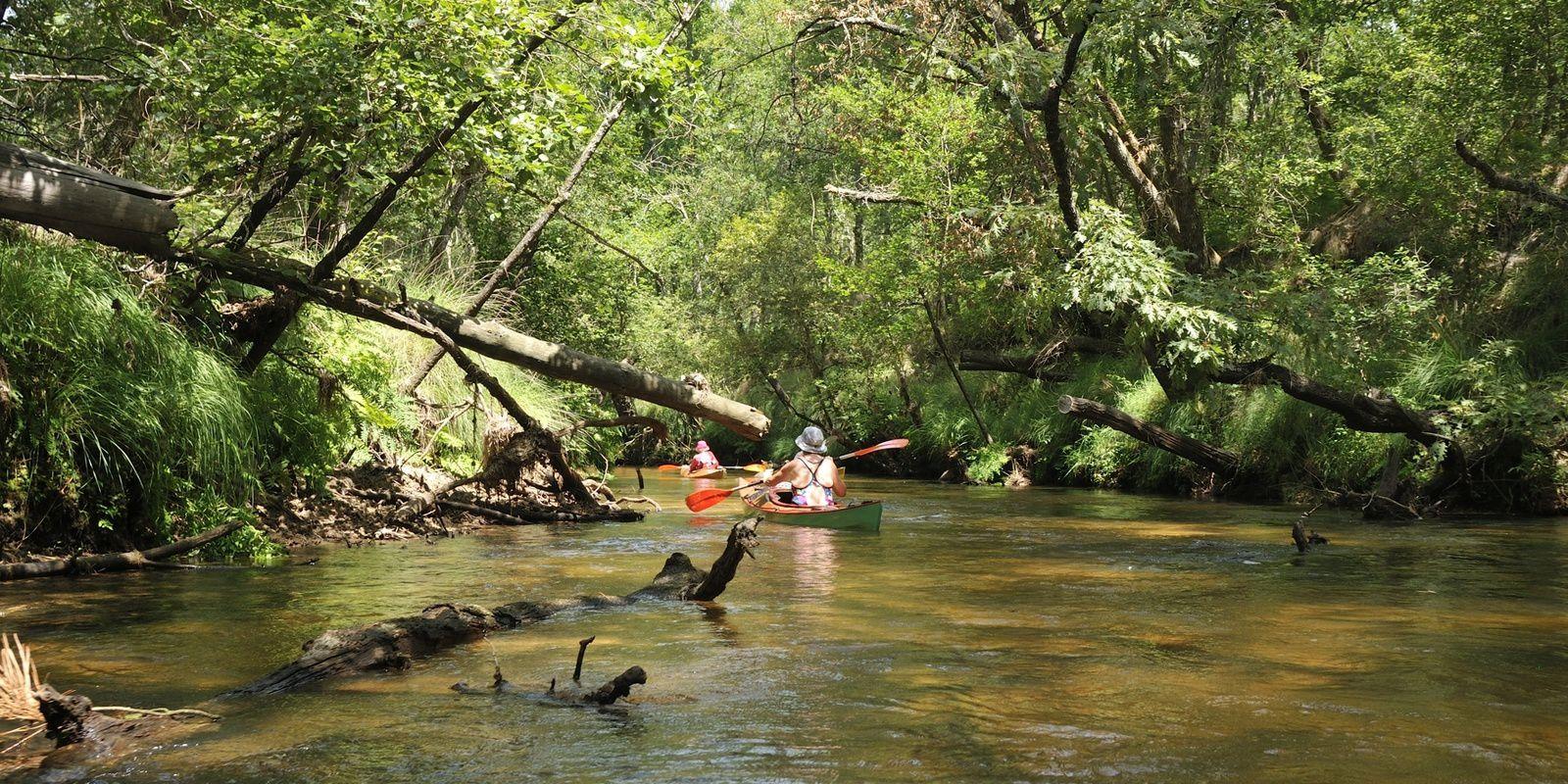 la Leyre, en kayak et canoë bois, du 22 au 29 juillet, de Mexico au Bassin d'Arcachon