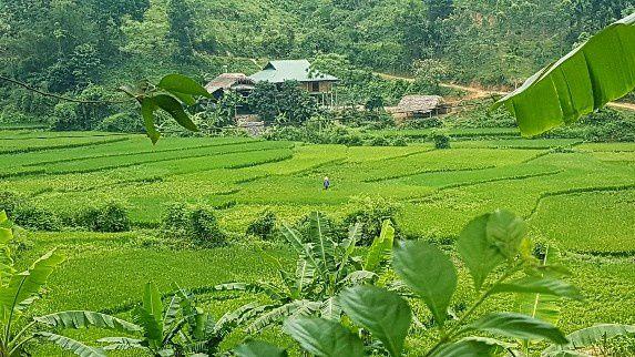 Sapa, les fameuses rizières en terrasse