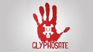 Glyphosate, un produit dangereux à interdire en totale transparence