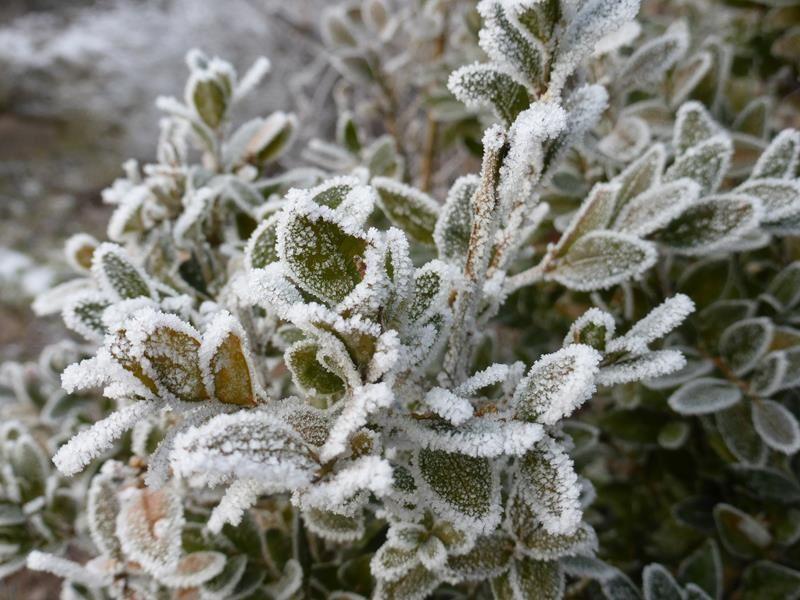 Brrr...c'est l'hiver !