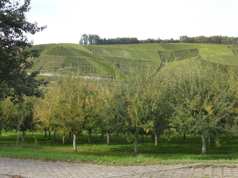 Balade en Ortenau : à vélo !