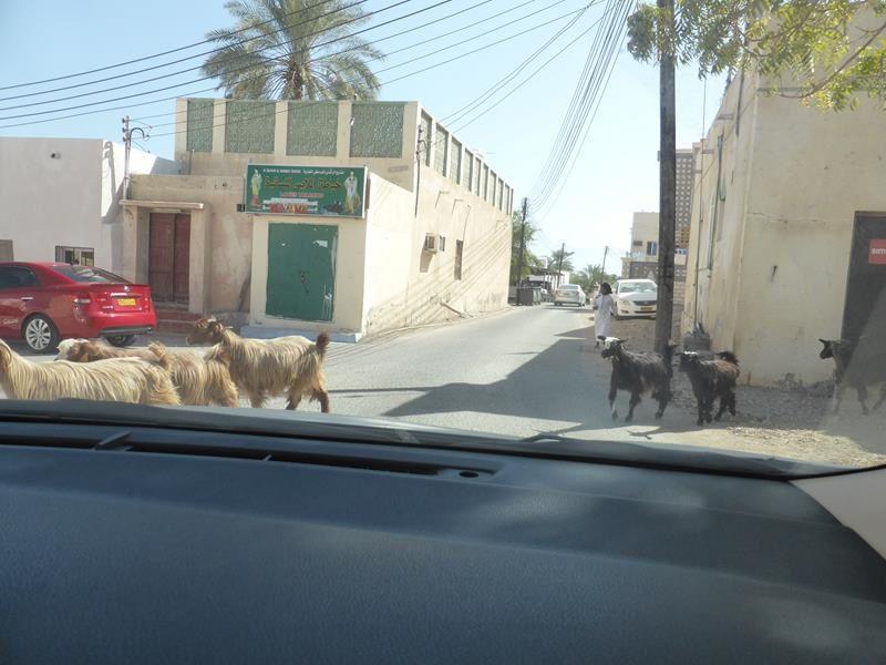 La côte Est et le Wadi Al Shab