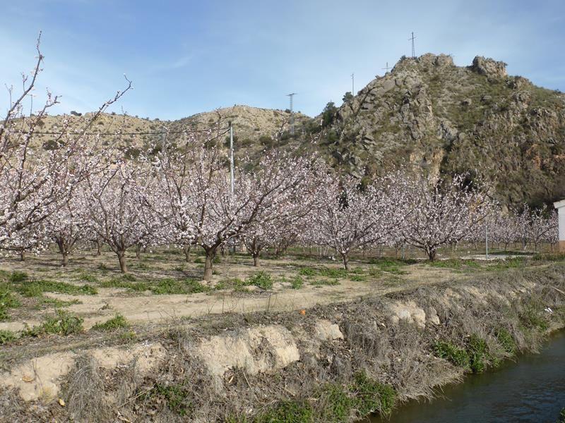 La Ruta de Las Norias à Abaràn