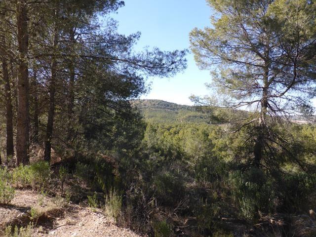 Via Verde Caravaca de la Cruz - Bullas