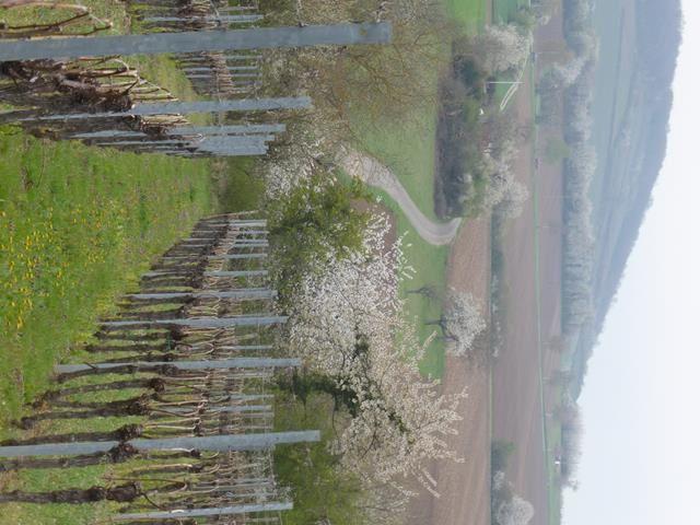 Le printemps sur la colline...