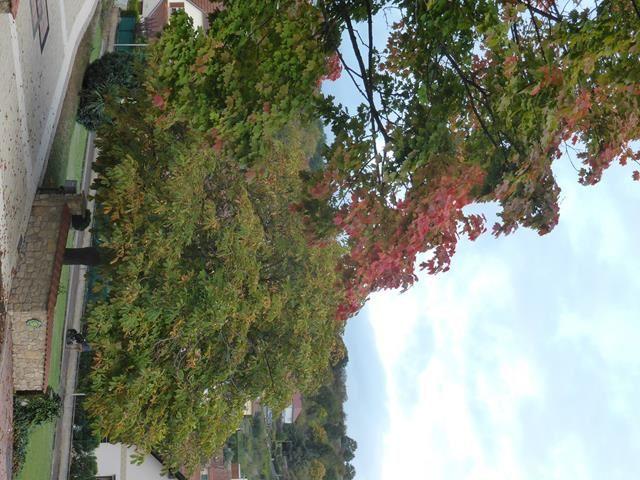 Ici, c'est l'automne !