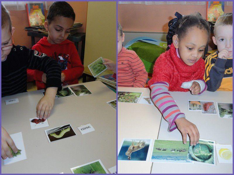 DE LA CHENILLE AU PAPILLON ( Enfants en inclusion individuelle à l'école maternelle Georges BRASSENS à ARRAS)