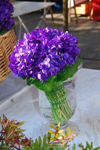 Les violettes de Tourrettes-sur-Loup