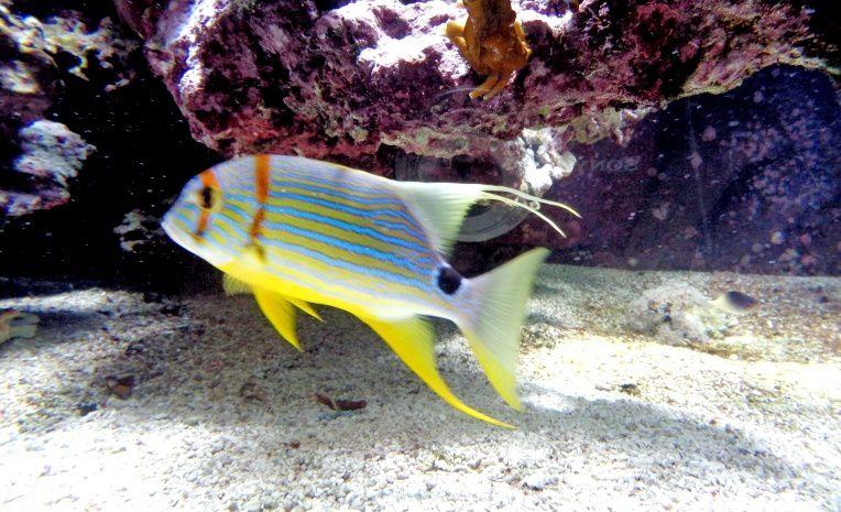Monaco : le Musée océanographique