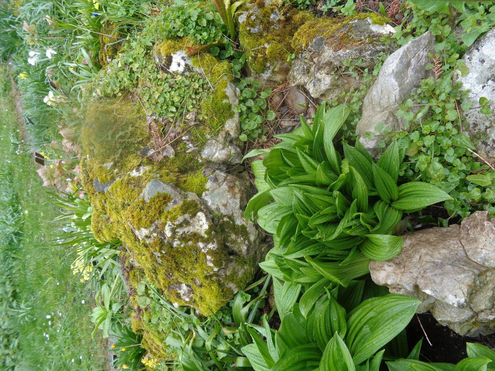 Bâle - 4e jour - Le jardin botanique
