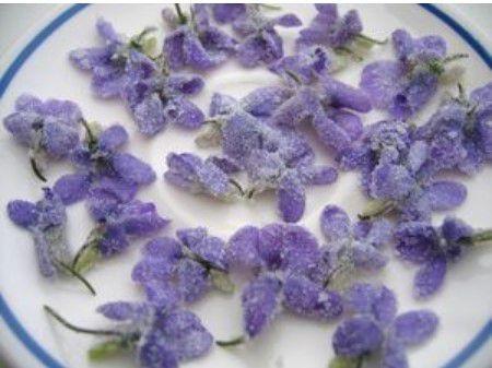 La violette candie