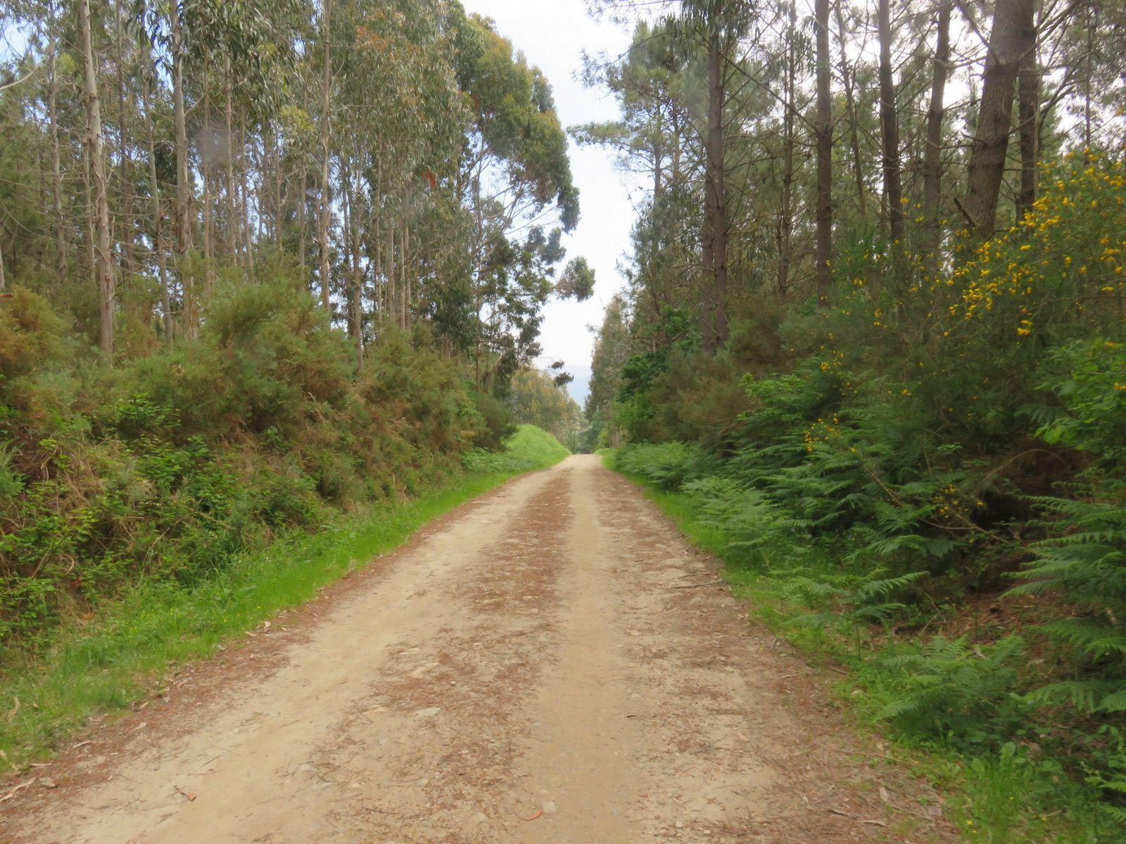 VENDREDI 25 MAI 2018: ETAPE 22 DU JEUDI 24 MAI: LIRES - MUXIA 15 km