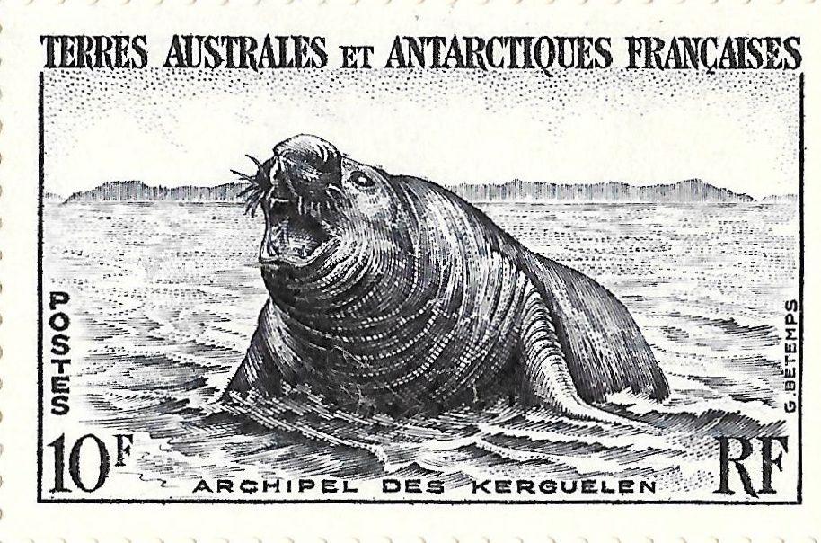 Eléphant de mer mâle sortant de l'eau (TP Y&T 6)