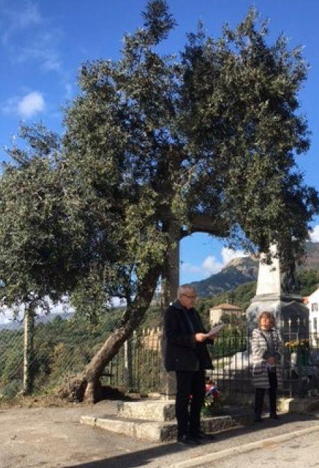 Cérémonie sous un arbre penché