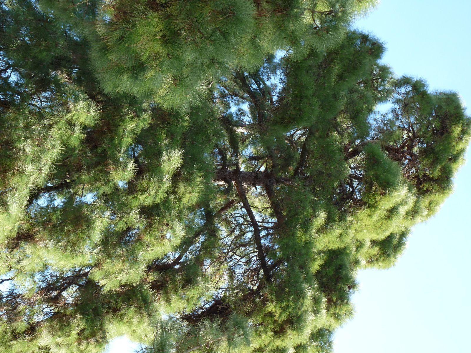 Pins et Palmiers à la Maison de l'environnement Nice Bd de Cessol.