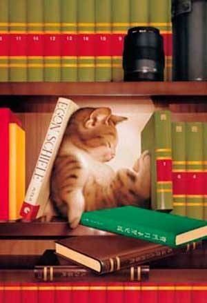 Chats lecture...
