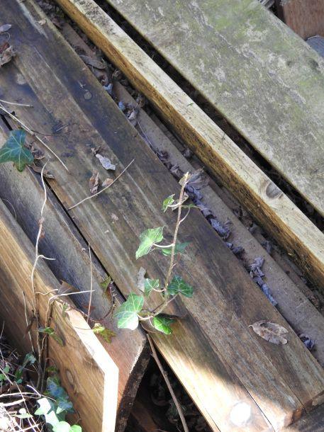 Vie terrestre : les feuilles d'ombres
