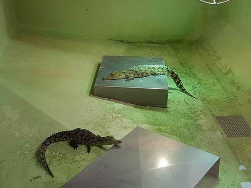Ferme aux Crocodiles : une journée de fou en famille ! [+Concours]